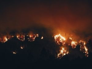 Forest Fire in Tamil Nadu
