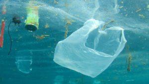 Plastic and marine life